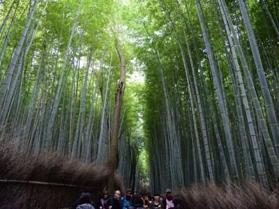 嵯峨野の竹林の道