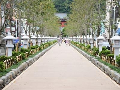 鶴岡八幡宮の正式な参道である「段葛」。正面には鶴岡八幡宮の三の鳥居が見える