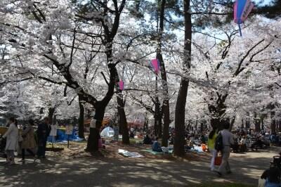 大勢の人々が季節の彩りを楽しむ大宮公園の自由広場