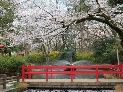桜で包まれる与野公園の弁天池