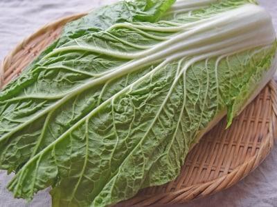 白菜の冷凍保存の方法は? おすすめの保存テクニック