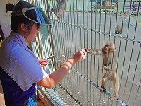波勝崎苑の猿