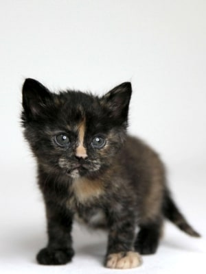 サビ猫ちゃんの女の子