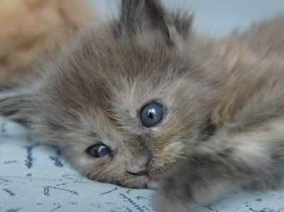 黒猫の瞳の色は黄色が多いような気がするのですが …
