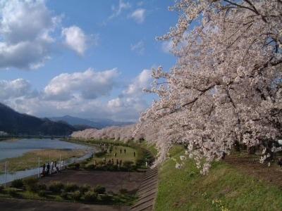 【秋田】角館・檜木内川の桜並木