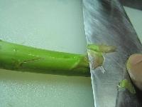 菜の花とアスパラを切る
