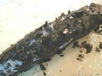 海苔を細かく砕き、ごはんに貼り付ける