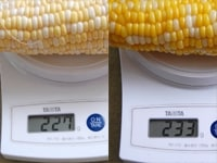 とうもろこしの重さ比較