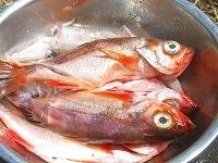 魚はウロコと内臓を取り、よく洗って水気を切る。