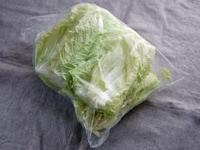白菜に塩をかける