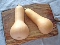 バターナッツの選び方・保存方法