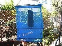 1~2週間ほど干して乾燥する