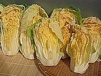 白菜を水抜きする
